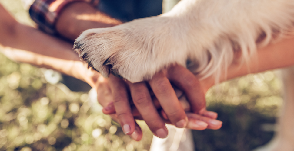 How to Prepare First Time Paw-Rents for Boarding
