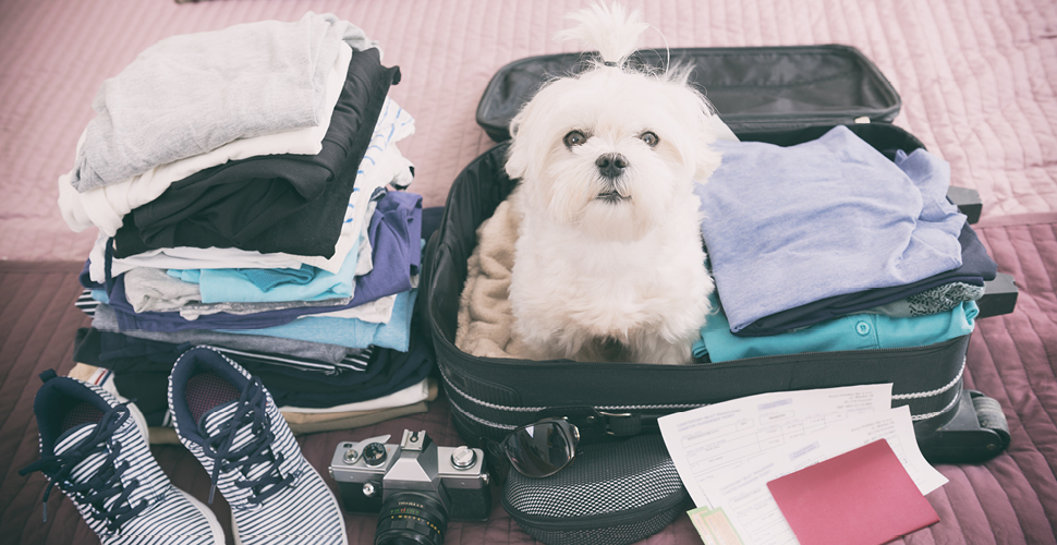 Do's and Don'ts of Traveling With Pets